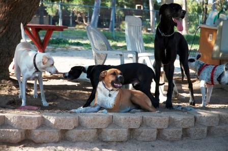 Dogs at Canine Corners